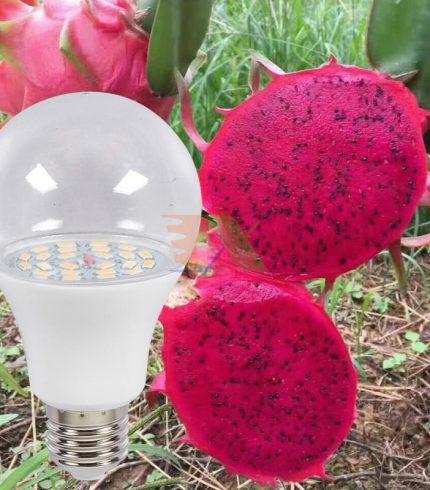 Đèn LED Bulb Asia Pacific 12W cho thanh long APL-PITAYA-12W
